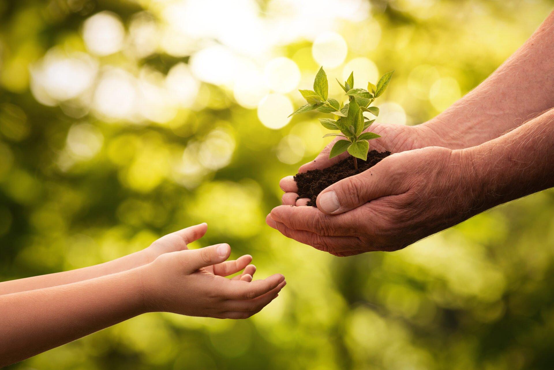 mies ojentaa lapselle taimen