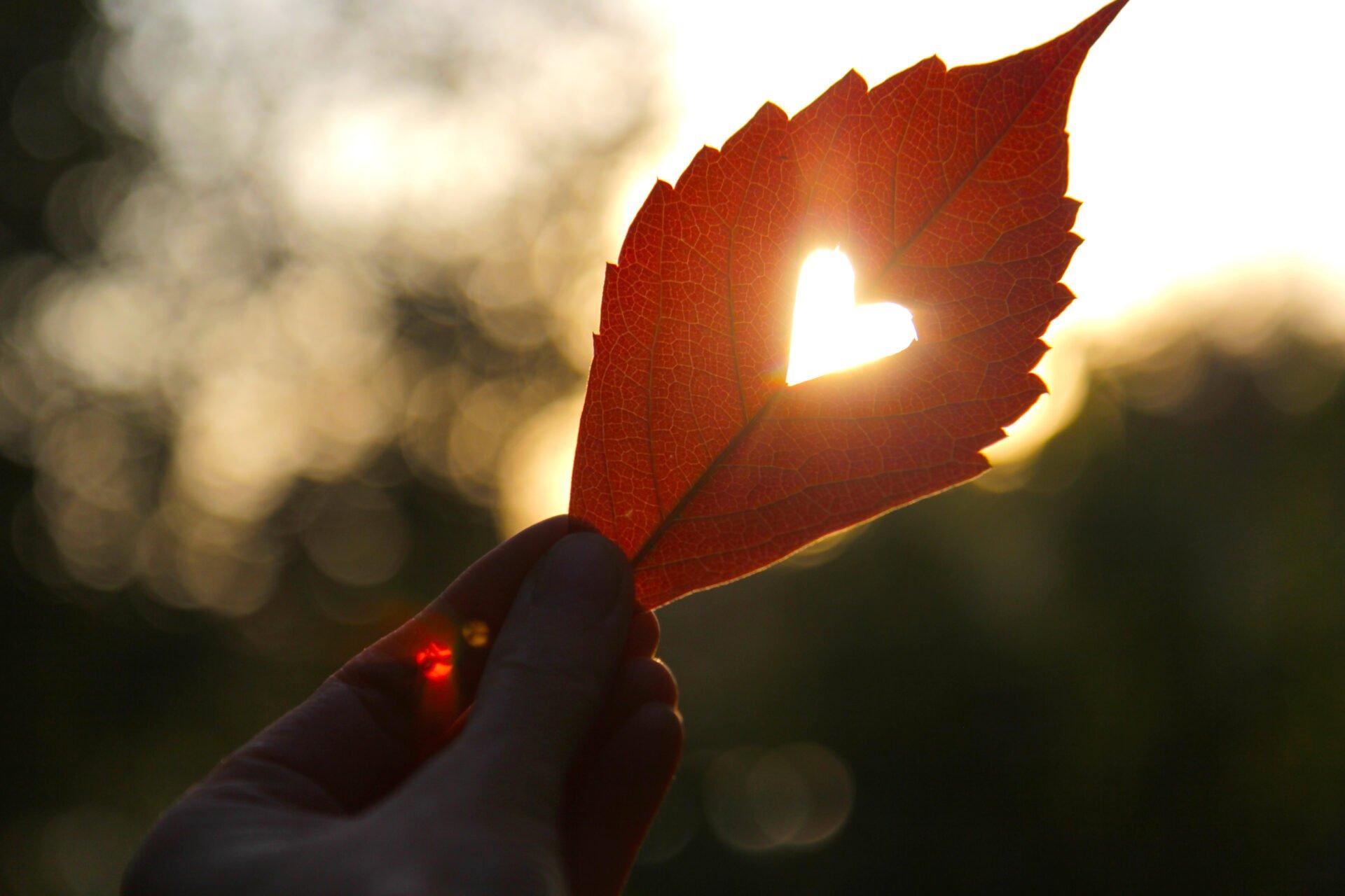 puun lehti jossa on sydän