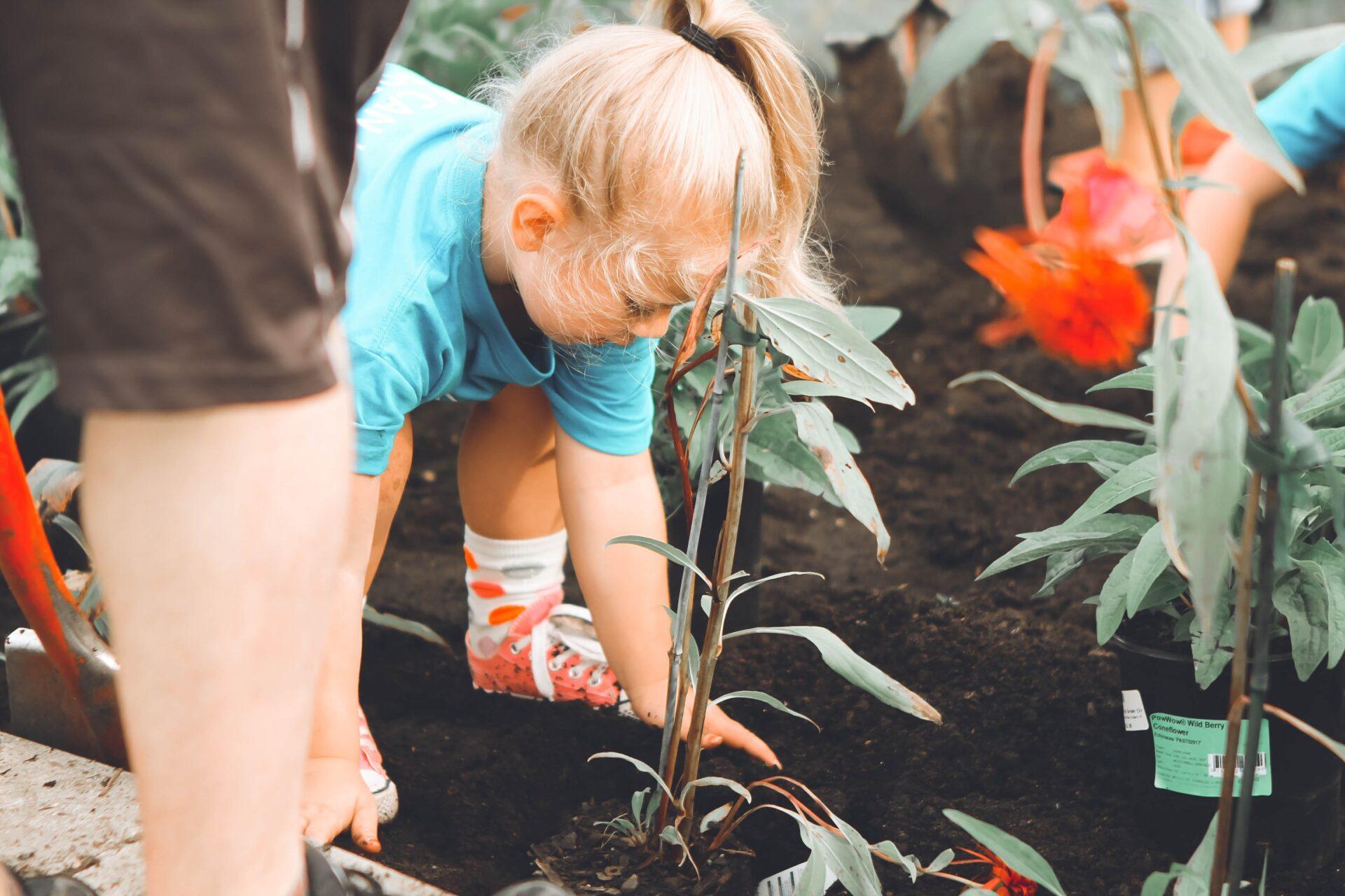 tyttö istuttaa taimia